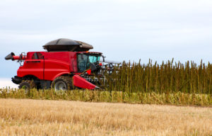 Hemp Farm NZ being harvested